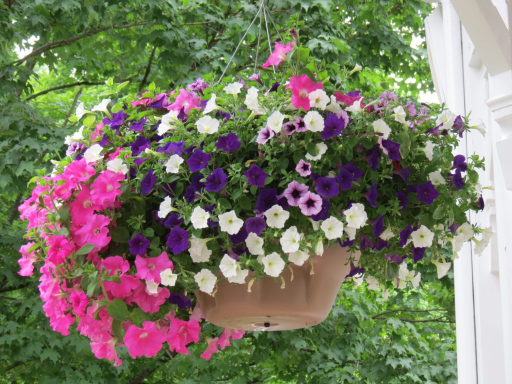 Hanging flower basket on the gazebo