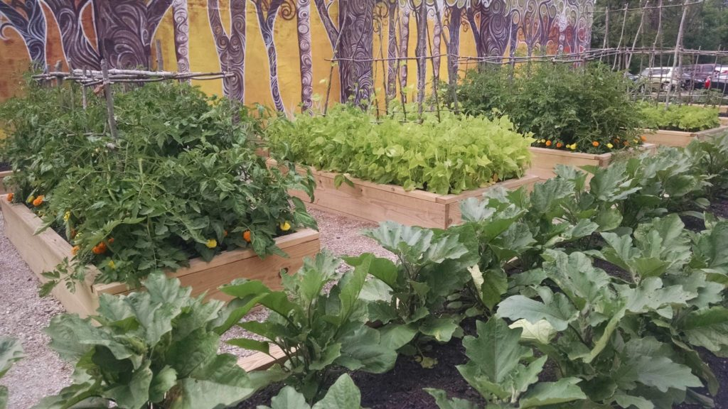 Giving garden beds with plants